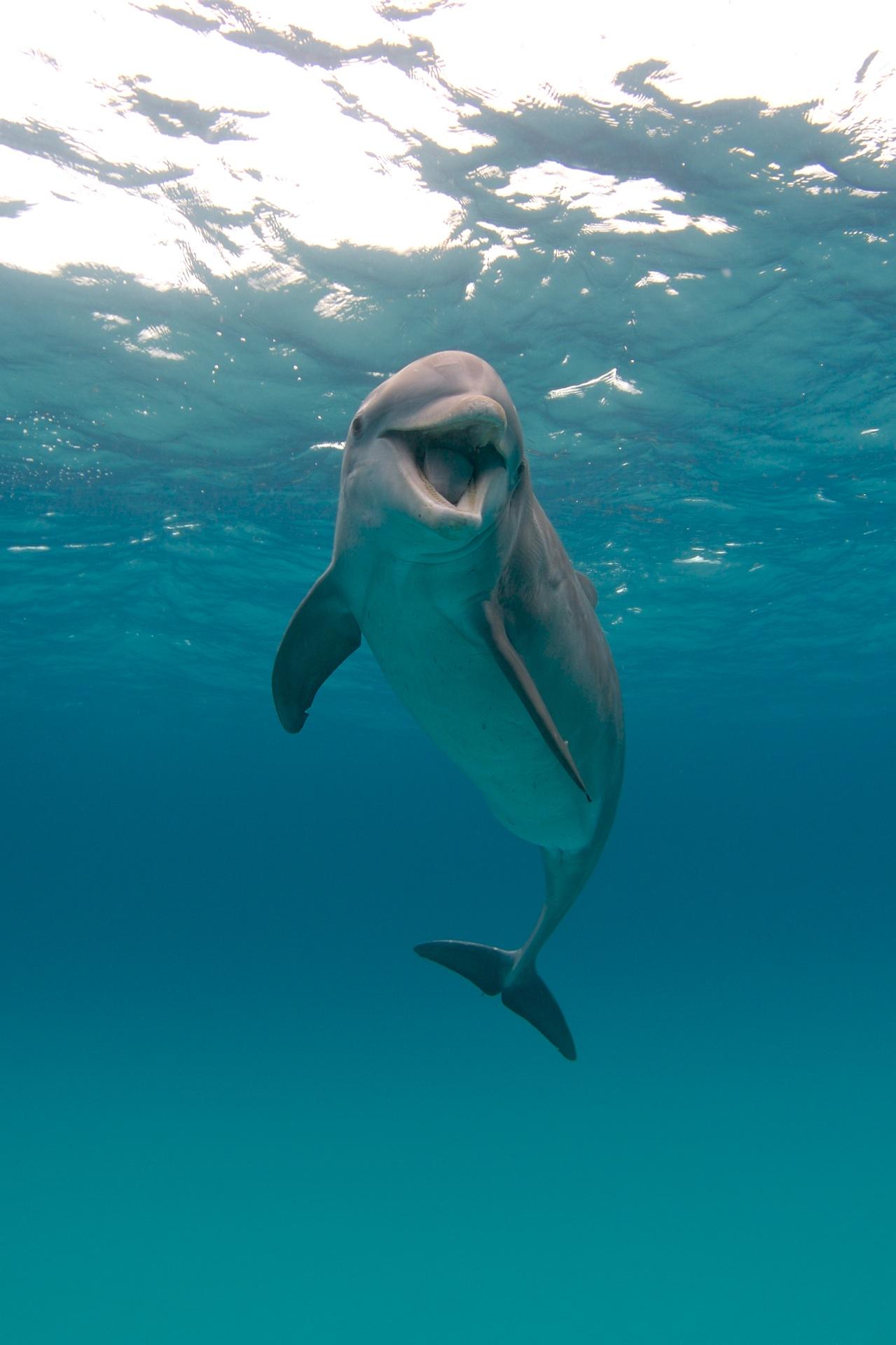 Photo Credits: Dolphin: Eric Cheng
