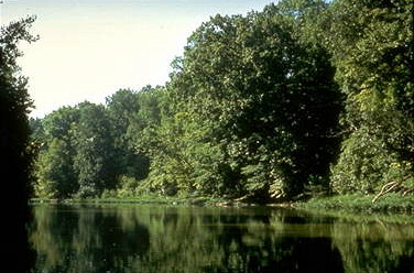 Sunny Summer Banks of the Olentangy River in Ohio